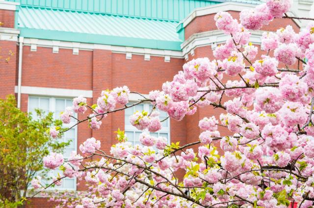 1. 期間限定で公開されるお花見名所!【造幣局 桜の通り抜け】