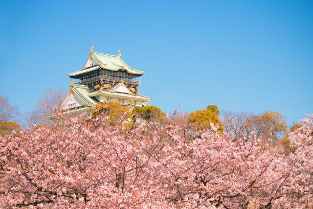 3. お城と桜の豪華共演はまさに日本の美!【大阪城】