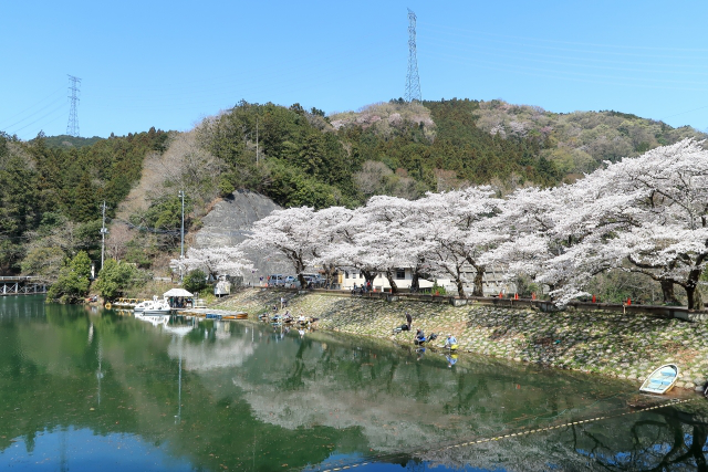 埼玉の湖 鎌北湖