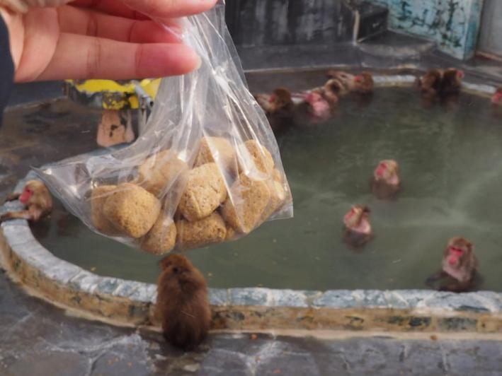 サル山温泉での餌やり