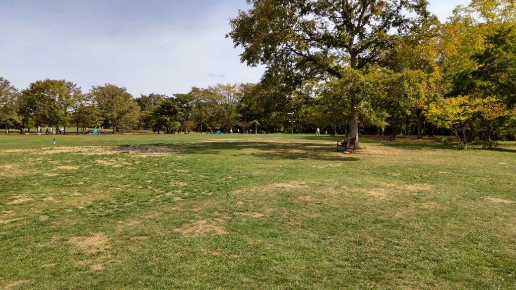 百合が原公園の芝生広場