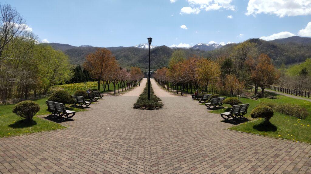 星観緑地の桜並木