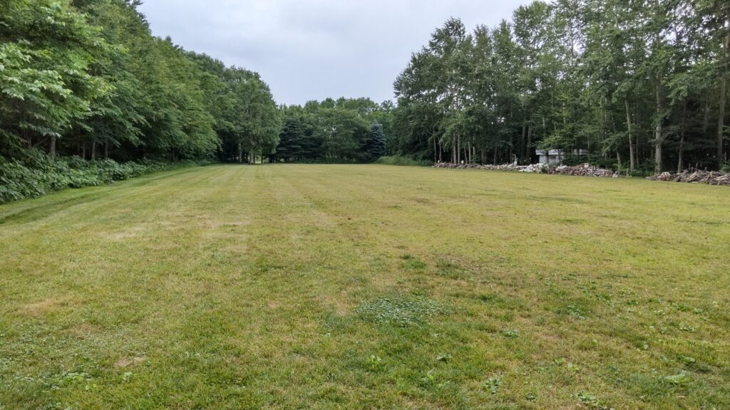 星観緑地の芝生広場